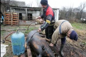 Fara abator sau târg de animale în preajma Craciunului